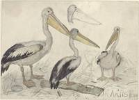 Pelicans in Artis Zoo, Jan van Essen, 1880