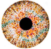 Color blindness, conceptual image chart