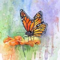 Monarch Art Prints & Posters by KIM KLOECKER
