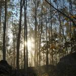 Morning WoodsMorning Woods - 1120111107 Prints & Posters