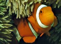 Nemo: the Captains Name