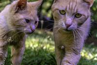 Feline Best Friends Skippy and Lovey 0369