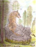 Dionis_Drawing_Tiger_PineTree_Rock