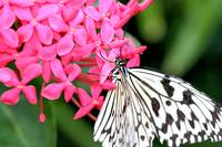 Pink Flower with White Butterfly