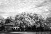 ir-color-house-gree-trees01