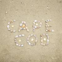 Cape Cod Seashells