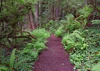 Red Trillium Falls Trail in Redwood National Park