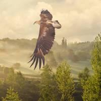 Golden Eagle Soaring by I.M. Spadecaller