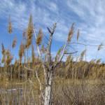 Coastal New England Marsh Landscape Prints & Posters