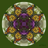 Monarch Butterfly Mandala Abstract Wall Art