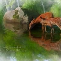 DeerStream Art Prints & Posters by Rick Wooten