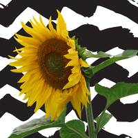 Sunflower on zig zags- quirky for etsy