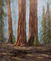 Sequoia trio
