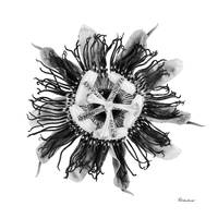Expressive Passion Flower in Greyscale 50674G