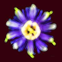 Abstract Passion Flower Violet Blue Red 002r