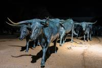 Dallas Bronze Longhorns Statues