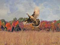 Autumn Wild Turkey