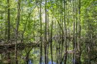 Big Thicket Swamp