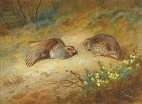 Archibald Thorburn 1860 - 1935 GREY PARTRIDGE