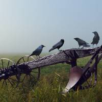 Gratitude of the Crows by I.M. Spadecaller