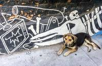 Graffitti Dog
