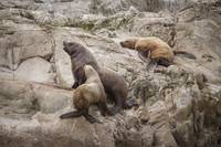 Sea Lion Arguments