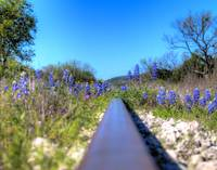 #13-Railroad with Blue Bonnets