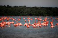 Chillout with flamingos