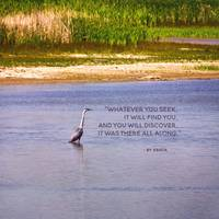Quote Whatever you seek Great Blue Heron