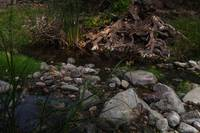Walk along Penitencia creek (Alum Rock Park)