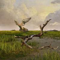 Old World Kestrel at Dawn by I.M. Spadecaller