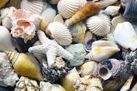 Tropical Treasure Seashells B91218