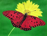 Red Butterfly on yellow flower.