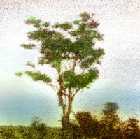 tree by the river, hand tinted