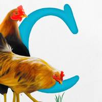 c is for chickens