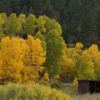 Backwoods Colorado Fall_DSC00479a Art Prints & Posters by Jack Huber