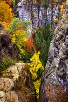 Yellow Glimpses. Saxon Switzerland