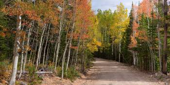Colorado Autumn Reds Back-country Road Panoramic V