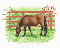 Grazing Ranch Horse Watercolor Irina Sztukowski