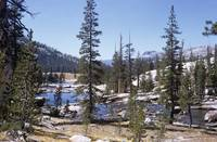 Tuolumne Creek #2, Yosemite NP (1970)
