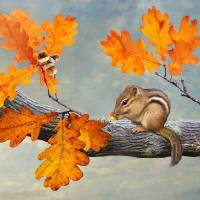 Chipmunk and Oak by I.M. Spadecaller