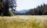 Camus Meadow, Lolo Pass, Idaho (1979)