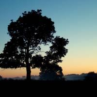 """""""broken tree"""" by PilgrimHill"""
