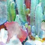 Cactus gallery