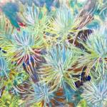 """Fireworks of Succulents plant garden"" by RDRiccoboni"