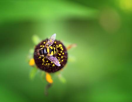 Wasp Beauty