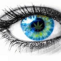 Behind Blue Eye Art Prints & Posters by Pat Cook