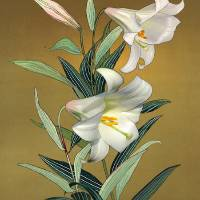 Trumpet Lily by I.M. Spadecaller