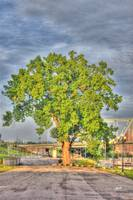 tree-at-newport-on-the-levee-jeremy-lankford