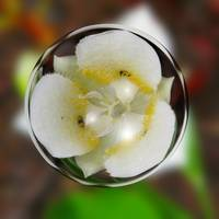 Small White Wildflower Floating in a Bubble
